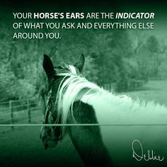 """""""Your horse's ears are the indicator of what you ask and everything else around you."""" - Debbie Disbrow on @LinkedIn #equestrian #quotesandsayings #horses #quote #awareness"""