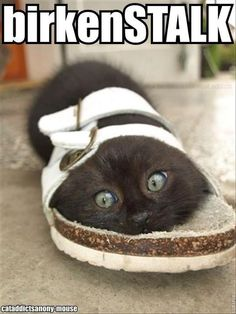 Beautiful Cats Pictures, Cute Kittens, Funny Cats and Kittens and More . All at One Place! Animals And Pets, Baby Animals, Funny Animals, Cute Animals, Funny Horses, Funniest Animals, Cute Kittens, Cats And Kittens, Ragdoll Kittens
