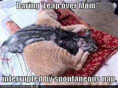 Nap cat