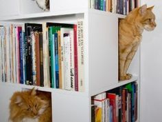 The CatCase: a Bookcase and a Ideal Playground for Your Cat @Whitney Cordova