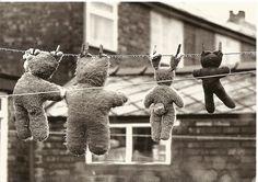 Teddy Bears Drying postcard