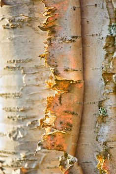 tree bark is nature's abstract art