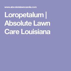 Loropetalum | Absolute Lawn Care Louisiana