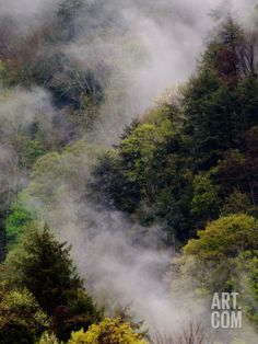 Mist Rising After Spring Rain in the Great Smoky Mountains National Park, Tennessee, USA Photographic Print by Adam Jones at Art.com