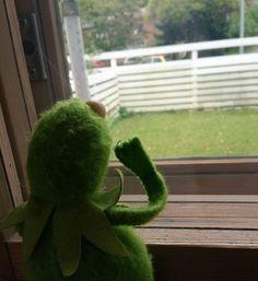 Kermit the frog Sapo Kermit, Dankest Memes, Funny Memes, Jokes, Vanellope, Sapo Meme, Kermit The Frog, Cute Frogs, Aesthetic Indie