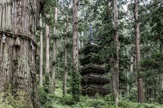 Five Storeyed Pagoda in Deep Forest - Japanese national treasure, Hagurosan Five Storeyed Pagoda.