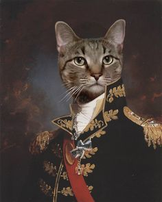 Dolores Astroth's artwork on myDaVinci Photomontage, Magazine Collage, Cat Costumes, Cats And Kittens, Kitty Cats, Pet Clothes, Furry Art, Cat Love, Cat Art