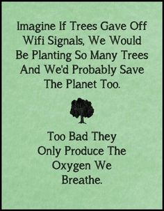 Trees. An integral part of nature's amazing beauty