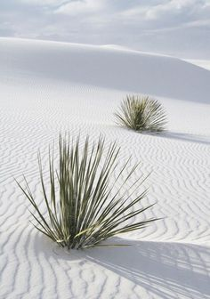 White Sands, New Mexico /