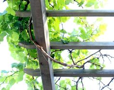 How to build a beautiful DIY pergola ( beginner friendly DIY grape arbor )! Free building plan with step by step drawings and lots of detailed photos. Build it easily for your garden without buying pergola kits! Iron Pergola, Pergola Swing, Metal Pergola, Pergola With Roof, Cheap Pergola, Covered Pergola, Backyard Pergola, Pergola Shade, Pergola Plans