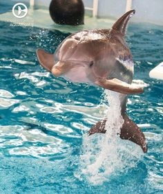 ❤ Dolphins