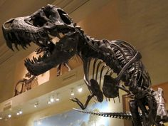 Walking With Dinosaurs at the National Museum of Natural History via @ferretingthefun