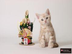 めっちゃ可愛い~~(*´∀`*)  迎春だニャ♪/猫 ネコ cats  (Nestle PURINA ネスレ日本)