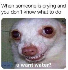 Funny Memes Tumblr, Funny Instagram Memes, Super Funny Memes, Funny Dog Memes, Crazy Funny Memes, Really Funny Memes, Stupid Memes, Funny Relatable Memes, Haha Funny