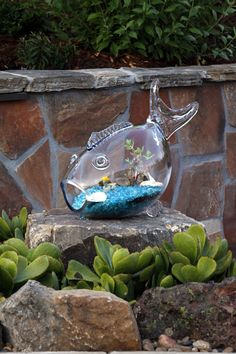My friend Cindy just bought one of these glass fish bowls with orange rocks and a beautiful aqua blue beta fish. Terrarium Containers, Air Plant Terrarium, Garden Terrarium, Terrarium Ideas, Terrariums, Landscape Glass, San Diego, Glass Fish Bowl, Coastal Decor