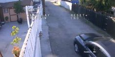 Shocking Video Captures  Dog Hit-And-Run