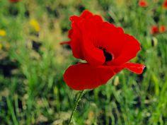 La Roja by Carmen Tébar, via Flickr