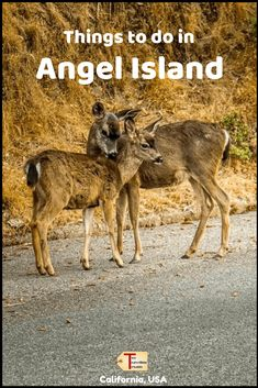 What to Do In Angel Island - Visiting Angel Island State Park Canada Travel, Usa Travel, Travel Pics, Travel Ideas, Angel Island San Francisco, Adventure Activities, Picnic Area, Road Trip Usa, Culture Travel