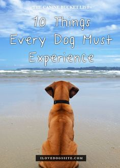 Which of the 10 would your dog love? http://theilovedogssite.com/the-canine-bucket-list-10-amazing-things-every-dog-should-experience-2/?src=PIN_VP_CanineBucket_2-21-14