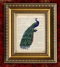 PEACOCK 1 Color Vintage Art Print 8x10 on Antique 1881 Book Page or Dictionary Page