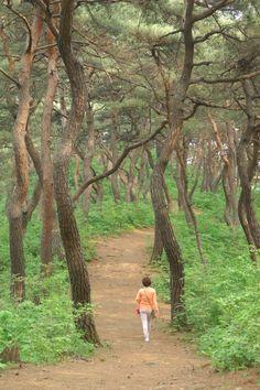 마곡사 신록, 숲속의 '힐링 캠프'| Daum라이프