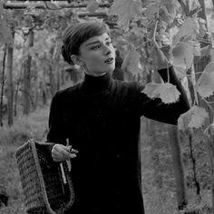 Audrey Hepburn in her Italian vineyard, 1955