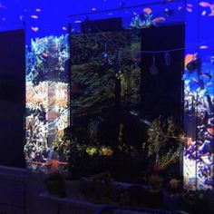 Merry Christmas from an underwater projection mapped world! Projection Mapping, Jesus Saves, Corals, Underwater, Merry Christmas, Peace, Fish, Art, Merry Little Christmas