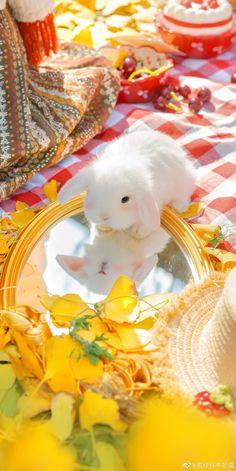 Tartan Wallpaper, Look Wallpaper, Scenery Wallpaper, Iphone Wallpaper, Yellow Aesthetic Pastel, Light Blue Aesthetic, Aesthetic Pastel Wallpaper, Aesthetic Wallpapers, Cute Baby Bunnies
