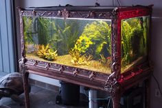 Our favorite group of vintage/antique fish bowls on display at Zoo Med are the ones that have the eery greenish glow. Description from reefbuilders.com. I searched for this on bing.com/images