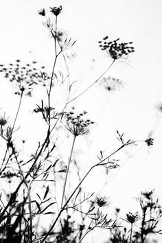Black and White Portrait Photography, How Beautiful – PhotoTakes Plante Crayon, Silhouette Fotografie, White Plants, Black And White Background, Black And White Aesthetic, The Dark Artifices, Black And White Photography, Flower Art, Nature Photography