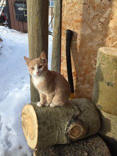 Handsome farm kitty Nelson J http://ift.tt/2BVWli8