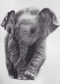 Gallery For gt Baby Elephant Face Drawing