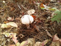 Toad stool in the woods of Arkansas