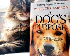 magellan-shares-a-dogs-purpose