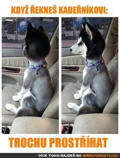 """Derpy Husky Memes In Honor Of Those Big Dummies - Funny memes that """"GET IT"""" and want you to too. Get the latest funniest memes and keep up what is going on in the meme-o-sphere. Cute Funny Animals, Funny Animal Pictures, Funny Cute, Funny Shit, The Funny, Funny Dogs, Funny Memes, Funny Stuff, Daily Funny"""