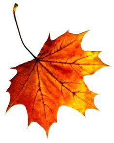 Explore Amy Pratt's photos on Photobucket. Autumn Art, Autumn Garden, Autumn Trees, Autumn Leaves, Watercolor Leaves, Watercolor Paintings, Fall Library Displays, Fall Clip Art, Leaf Stencil