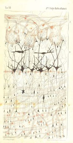 Foundations_neurons