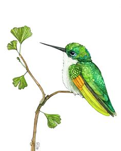 This is a fine art giclée print made from my original watercolor painting titled, Green Hummingbird. PAPER OPTIONS (1) ARCTIC MATTE - A basic matte paper, with a smooth, flat surface. This paper is acid free. (Bright white / 230gsm) (2) SMOOTH FINE ART - A semi-smooth cotton paper, with a natural Watercolor Hummingbird, Hummingbird Art, Watercolor Bird, Watercolor Paintings, Painting Prints, Bird Drawings, Bird Prints, Beautiful Birds, Painting & Drawing