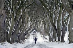 100 Places Straight Out of Fairy Tales (PHOTOS) A man walks along the famous Dark Hedges avenue of trees in Antrim, Northern Ireland. This famous tunnel-liked avenue of intertwined beech trees was planted in the (Charles McQuillan/Getty Images) World Most Beautiful Place, World's Most Beautiful, Beautiful Places, Chelsea Fc, Belfast, Premier League, Earth Photos, The Weather Channel, Snow And Ice