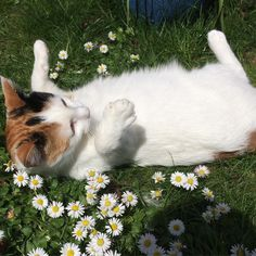 Just smellin the flowers...