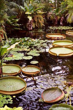 Cosas que hacer en Okinawa: el jardín botánico en Okinawa y sus estanques de lirios enorme de agua