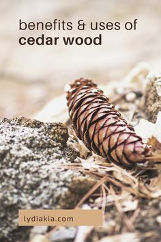 Cedarwood is a relatively common kind of soft wood that has sooo many uses! It, of course, comes from the cedar tree; and today we're gonna get into some of the ways you can benefit from it! Keep reading to find out what to do with cedar wood… Cedarwood Oil, Cedarwood Essential Oil, Essential Oils, Cedar Fence, Cedar Wood, Natural Disinfectant, Wellness Mama, Natural Cough Remedies, Cedar Trees