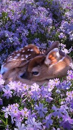 animals cutest - baby deer - cute baby deer - animals wild - deer photography - deer photos - wildlife photography - animal photography - deer photography close up - dear photography forests - Baby Animals Super Cute, Cute Little Animals, Cute Funny Animals, Cute Dogs, Baby Animals Pictures, Cute Animal Photos, Animals And Pets, Deer Pictures, Baby Wild Animals