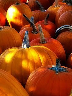 You have to find the perfect pumpkin patch to wait on the Great Pumpkin Fall Pictures, Fall Photos, Pumpkin Pictures, Autumn Day, Autumn Leaves, Hello Autumn, Winter, Wicca, Autumn Scenes