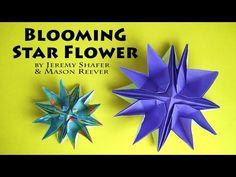 Blooming Star Flower - YouTube