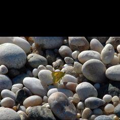 Butterfly on East Marion, LI beach