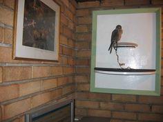 Turn a Kestrel wall perch into a piece of art!
