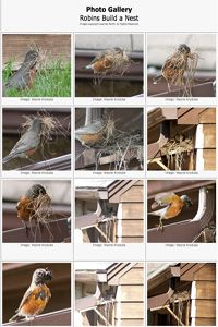 photo gallery cards -building a nest