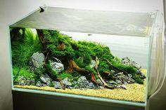 6 weeks tank by George Farmer. Pin by Aqua Poolkoh Biotope Aquarium, Aquarium Fish Tank, Planted Aquarium, Aquascaping, Aquarium Landscape, Nature Aquarium, Freshwater Plants, Freshwater Aquarium, Turtle Tank Setup