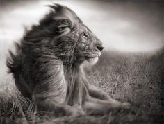 Nick Brandt: African wildlife photography -beautiful...